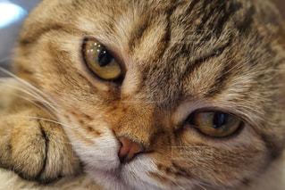 猫の写真・画像素材[655756]