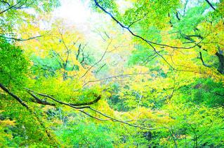 秋のはじめの写真・画像素材[890328]