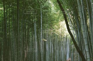 京都 嵐山 - No.890503