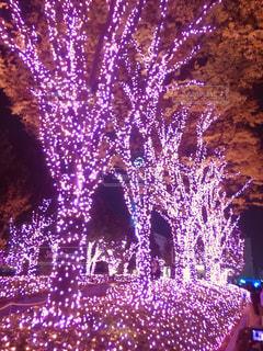 ピンクの並木道の写真・画像素材[895737]