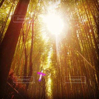 竹林の写真・画像素材[891006]