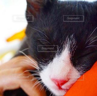 おやすみ猫の写真・画像素材[891013]