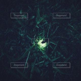 夜ホタルの写真・画像素材[891193]