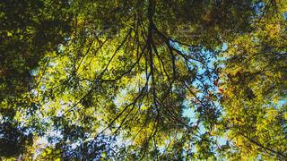 覆われた木から見える空 - No.895921