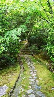 緑豊かな緑の森の側に - No.898812