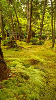 苔の森の写真・画像素材[898813]