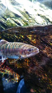 水面下を泳ぐ魚 - No.898815
