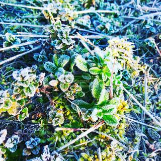 霜の降りる朝の写真・画像素材[901303]
