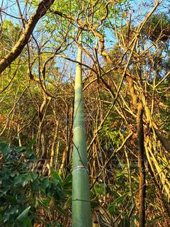 フォレスト内のツリー - No.901325