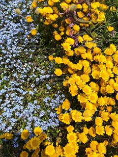 黄色い花と青い花 - No.906909