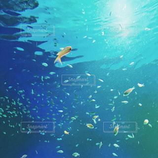 緑の水中 - No.912003
