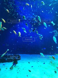 水中を泳ぐ熱帯魚 - No.912005