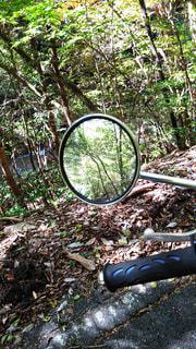 ミラーに映る木々の写真・画像素材[964417]