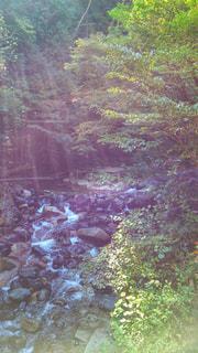 山を流れる小川の写真・画像素材[964418]