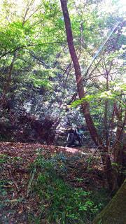 森に潜むバイク - No.964419