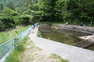 釣り堀で釣りの写真・画像素材[1217274]