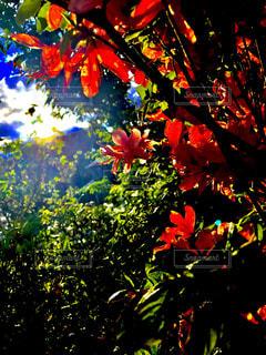 春の思い出 - No.891362
