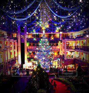 クリスマスツリーの写真・画像素材[905663]