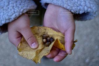 一切れのパンを持っている手の写真・画像素材[893527]