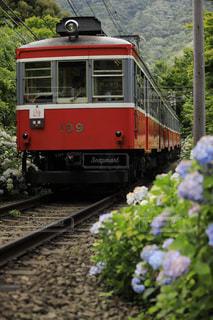 紫陽花と箱根登山鉄道の写真・画像素材[1275640]