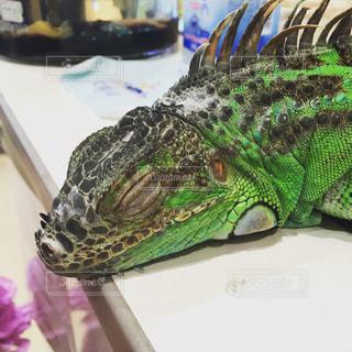 近くに爬虫類のアップの写真・画像素材[951456]