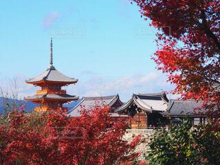 秋の京都の写真・画像素材[893015]