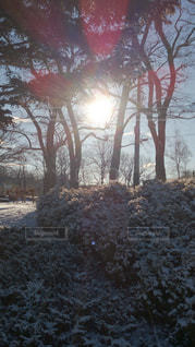 雪に覆われた木の写真・画像素材[892133]