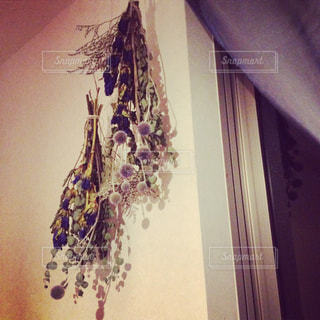 近くの花のアップの写真・画像素材[892543]