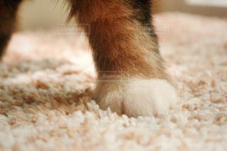 可愛い子犬バーニーズ・マウンテン・ドッグの写真・画像素材[892812]