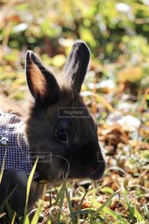 近くに芝生の上の小さな動物の立っているをの写真・画像素材[1589849]