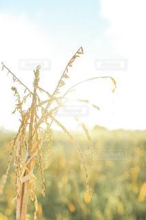 近くの植物のアップの写真・画像素材[1594095]