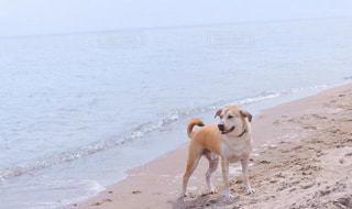 砂浜の上に犬がいるの写真・画像素材[1596598]