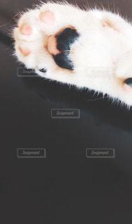 近くに猫のアップの写真・画像素材[1596604]