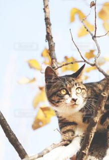 枝の上に座っている猫の写真・画像素材[1596605]