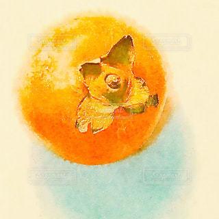 柿の写真・画像素材[1599354]