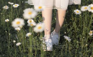 草の中の黄色い花を着た女性の写真・画像素材[2338757]