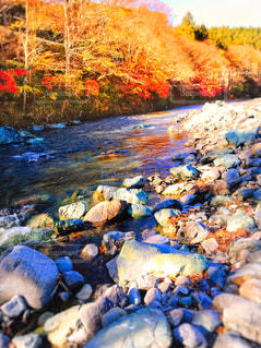 秋の河原の写真・画像素材[895572]