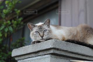ノラ猫の写真・画像素材[905773]