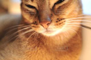 猫のどアップの写真・画像素材[905776]
