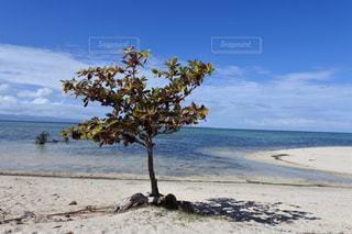 セブ島の海の写真・画像素材[2408950]