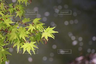 日本の春の写真・画像素材[2409126]