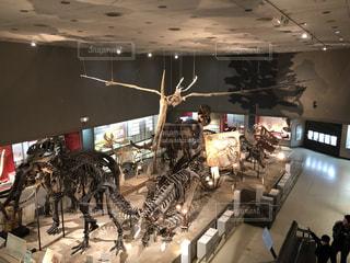 博物館の化石展示の写真・画像素材[1006508]