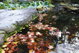 近くに池のアップの写真・画像素材[893003]