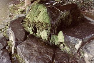 手水舎の苔の写真・画像素材[925640]