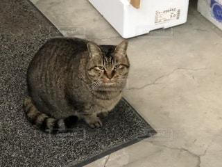 ネコの写真・画像素材[935285]
