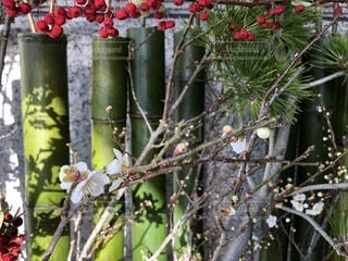 梅の咲きかけ - No.945662