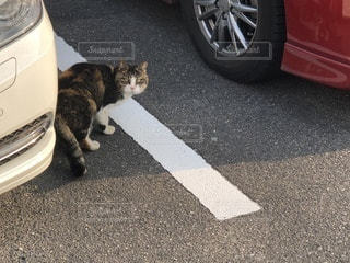 振り向き猫図の写真・画像素材[1022219]