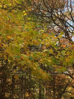 秋の公園 黄緑色の葉の写真・画像素材[893178]
