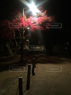 奈良公園の夜の顔の写真・画像素材[893508]