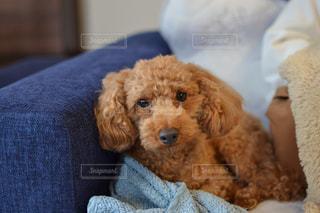 近くに犬のアップの写真・画像素材[893497]